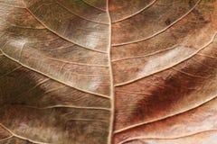 Konst av naturliga 2 fotografering för bildbyråer