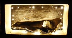 Konst av skallen Arkivbilder
