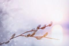 konst branches blomningfjäderpilen Fotografering för Bildbyråer