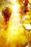 Konst exponeringsglaset av vin och mogna druvor Arkivfoton