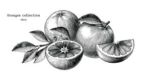 Konst för gem för tappning för attraktion för apelsinsamlingshand som isoleras på vit vektor illustrationer