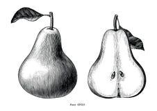 Konst för gem för tappning för attraktion för päronfrukthand som isoleras på den vita backgrouen stock illustrationer