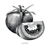 Konst för gem för tappning för tomathandattraktion som isoleras på vit bakgrund vektor illustrationer