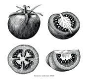 Konst för gem för tappning för tomathandattraktion som isoleras på vit bakgrund stock illustrationer