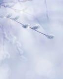 Konst fjädrar förgrena sig bakgrund Fotografering för Bildbyråer