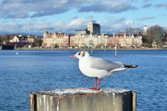 Konstanz, Germany Royalty Free Stock Image