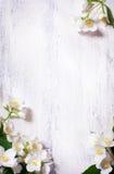 konstbakgrund blommar gammalt fjäderträ för ramen Arkivfoton