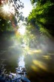 Konstbeautifulandskap med den tropiska floden för morgon i djungel Arkivfoton