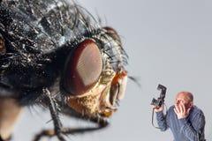Konstcollageman med kameran som skrämmas av jätte- fluga royaltyfria bilder