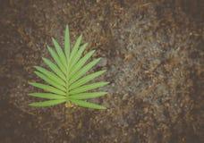 Konsten av blommor, ändring av palmträdet royaltyfri bild