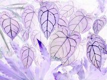 Konsten av negativa sidor för Anthuriumcrystallinum royaltyfri fotografi