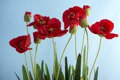 konstgjord blomma Royaltyfri Fotografi