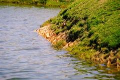 Konstgjord förlagematare för egyptisk gås i vatten på den Saadiyat ön royaltyfri foto