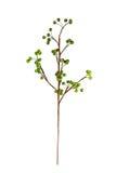 konstgjord härlig blomma Fotografering för Bildbyråer