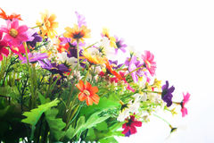 konstgjord isolerad white för bakgrund blomma Arkivbilder