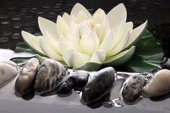 konstgjord lotusblomma Royaltyfri Bild