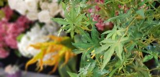 Konstgjord marijuanaväxt arkivfoto