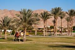 Konstgjord oas på semesterorten för hotellMovenpick strand Taba. royaltyfri bild
