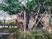 konstgjord växt Royaltyfri Foto