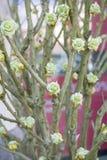 Konstgjorda blom på kala vinterfilialer Royaltyfria Bilder