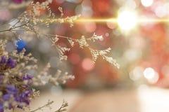 Konstgjorda blommor i signaler och suddighet för mjukt ljus Arkivbilder