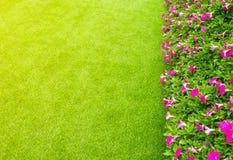 Konstgjorda gräsfält och blommor Arkivbilder