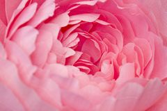 Konstgjorda pappers- blommor som göras av handen Härlig dekor Arkivbild
