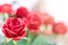 Konstgjorda röda rosor på suddig bakgrund fotografering för bildbyråer