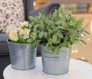 Konstgjorda rosor och gröna växter i metallkrukor arkivfoto