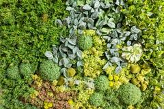 Konstgjorda vertikala trädgårdar med fejkar växter på väggar Royaltyfria Bilder