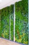 Konstgjorda vertikala trädgårdar med fejkar växter på väggar Royaltyfria Foton
