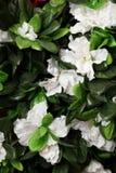 Konstgjorda vita blommor Royaltyfria Foton