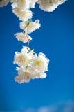 Konstgjorda vita blommor mot blå himmel royaltyfria foton