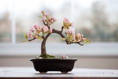 Konstgjort bonsaiträd med blommor Royaltyfri Foto