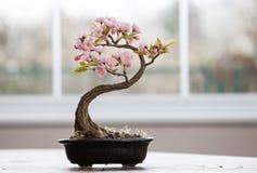 Konstgjort bonsaiträd med blommor Arkivfoto