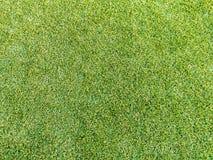 Konstgjort gräs arkivfoton