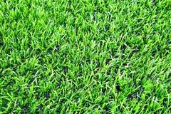 Konstgjort gräs av fotbollen & x28en; soccer& x29; fält arkivbilder