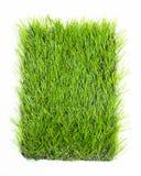 Konstgjort gräs som isoleras på vit bakgrund Royaltyfria Foton