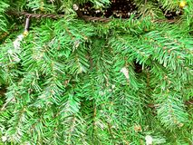 Konstgjort grönt dekorativt slut för julträd upp arkivfoto