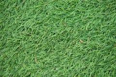 Konstgjort slut för grönt gräs upp makro arkivbilder