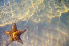 Konsthavsskal med sand som bakgrund Royaltyfria Bilder