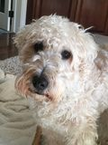 Konstig hund royaltyfri bild