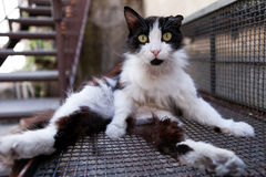 Konstig katt Royaltyfria Foton