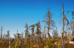 Konstig torr skog Royaltyfria Bilder
