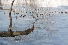 Konstig tree Arkivfoto