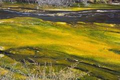 Konstiga färger i den Waimangu floden Arkivfoto