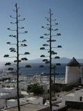 konstiga trees Arkivfoton