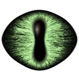 Konstigt grönt öga av det katt- djuret med den kulöra irins Detaljsikt in i isolerad rovdjurs- ögonkula vektor illustrationer
