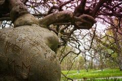 Konstigt krokigt träd med kedjan och olika inristade bokstäver, royaltyfri foto