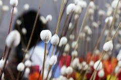 konstnärlig blomma Arkivfoton